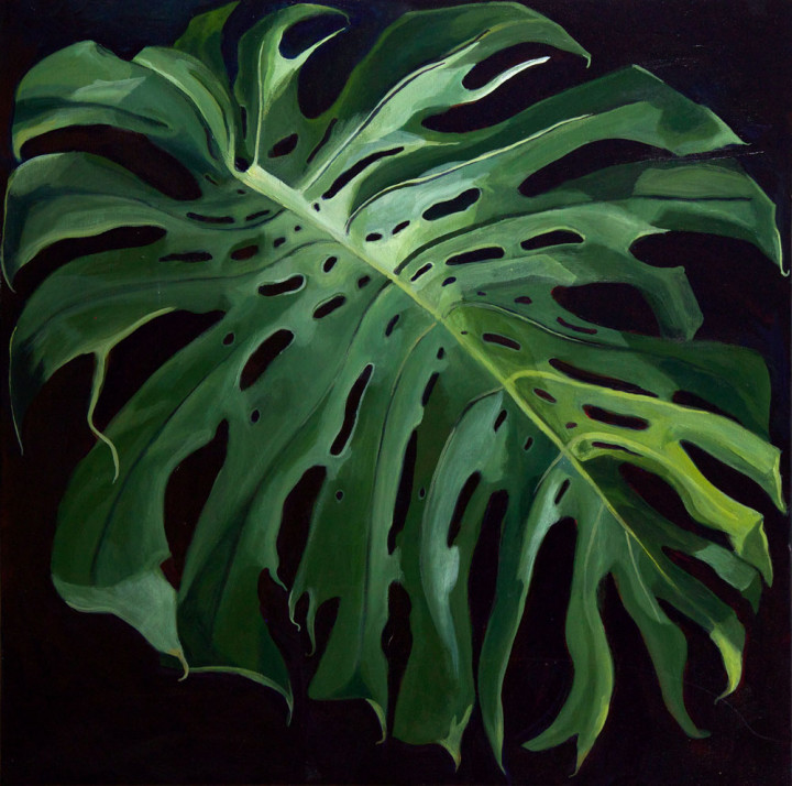 Hawaii - Philadendron Monstera I